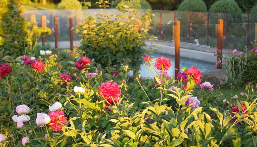 Blomster af englegaarden - Lejligheder's bruger kan bruge poolen