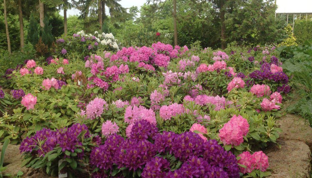 Blomster bed hos englegaarden - det sted du får Genhusning