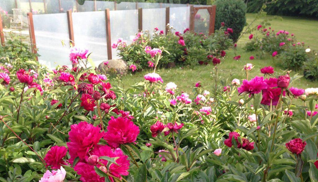 Blomster foran pool hos Englegaarden - hjælp til Forsikringsskader