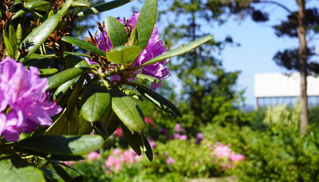 Blomster og hus af Englegaarden - det rigtig sted at få en midlertidigbolig