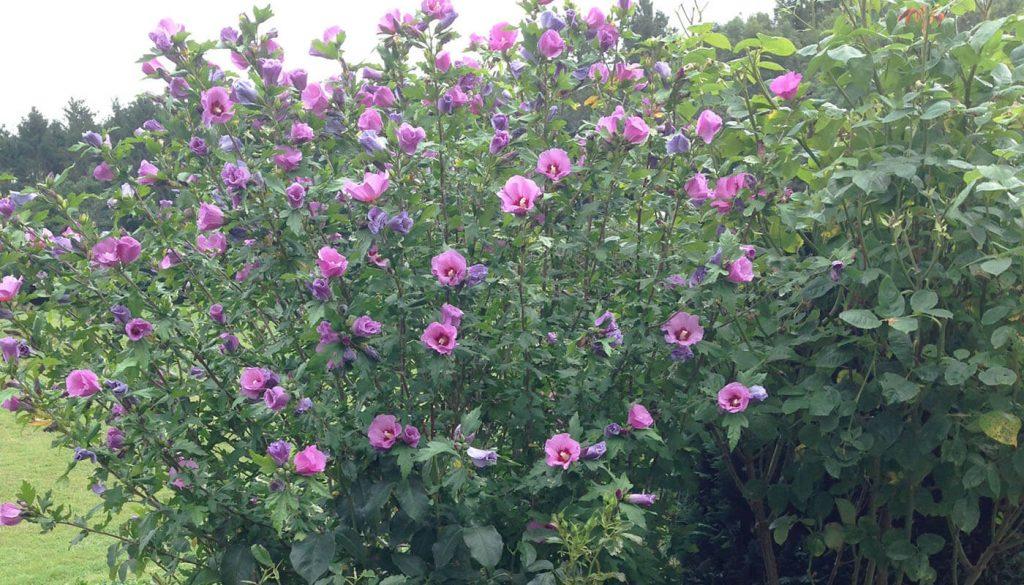 Blomster ved pool Englegaarden - derfor skal i vælge os
