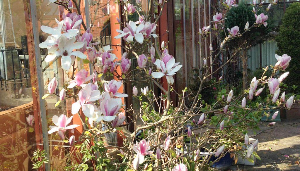 Blomster ved udestuen Englegaarden - lejlighed kan lejes her