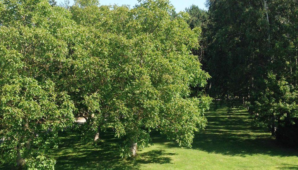 Nøde træer hos Englegaarden - hvis du kommer tæt på Måløv