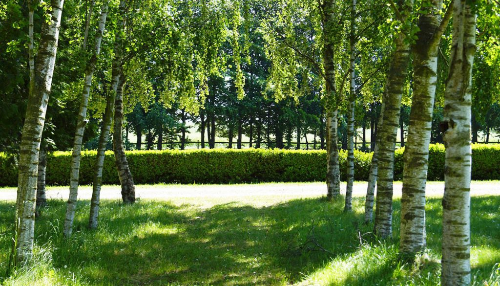 Udsigt i haven Englegaarden - Dette kan ikke opleves i Ballerup men kun her i Roskilde